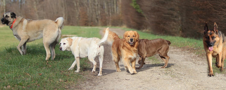 pension chien Doubs et Jura